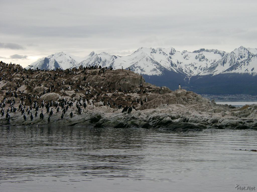 cormorants colony