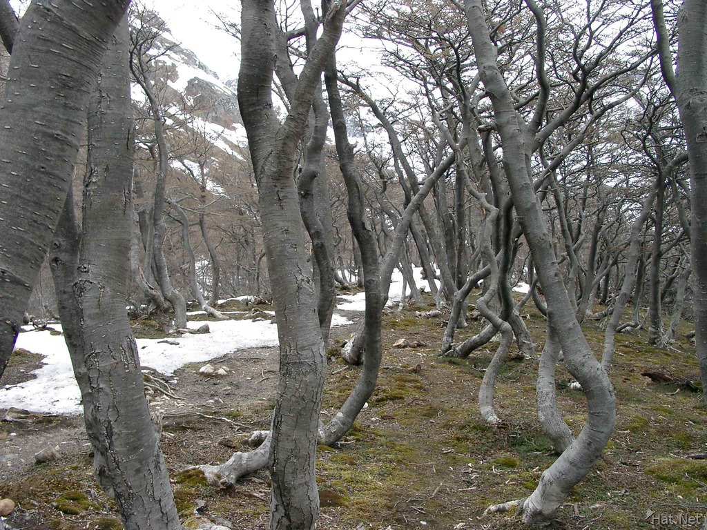 dry forest to the glacier