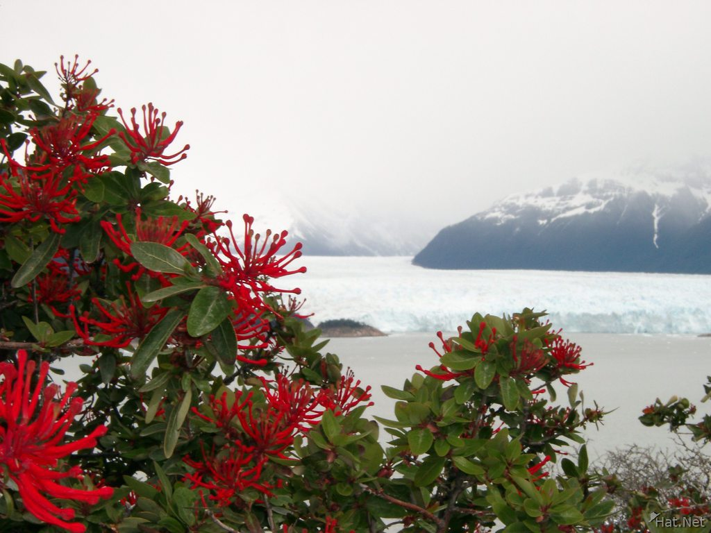 flowers and glacier
