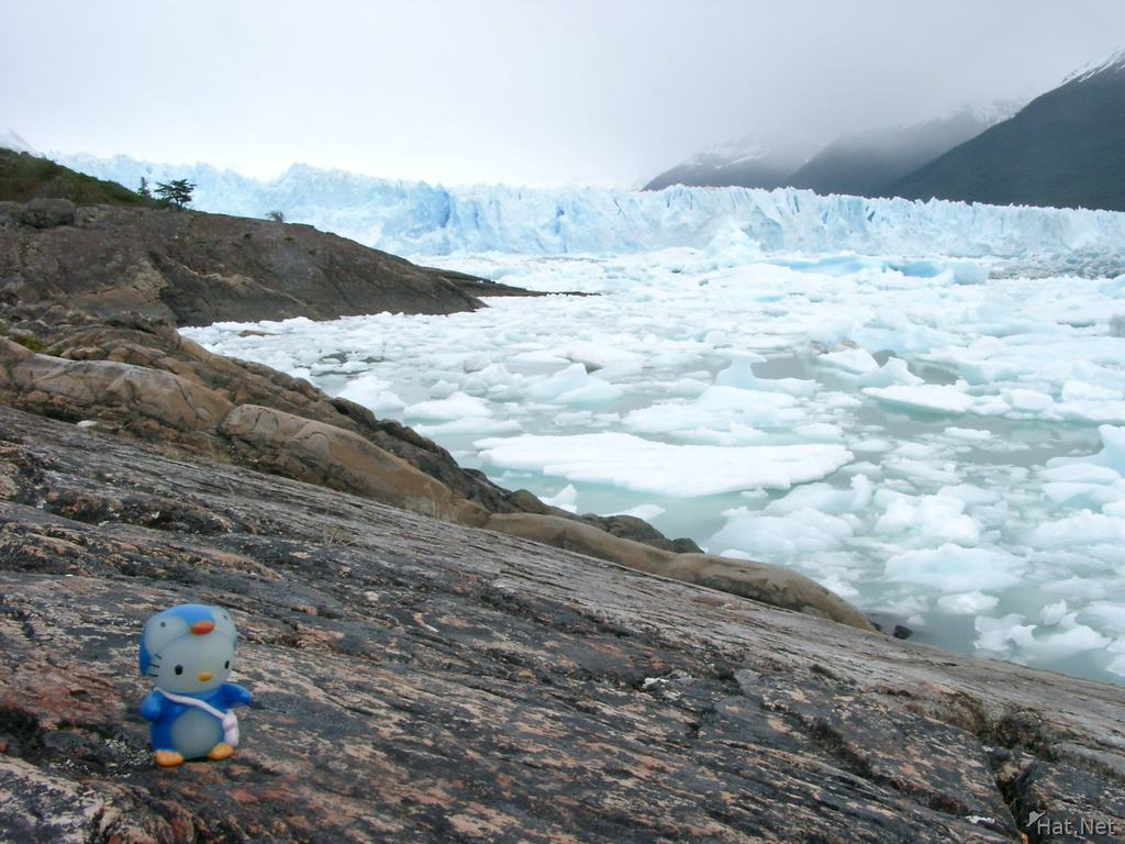 penguin kitty and moreno glacier