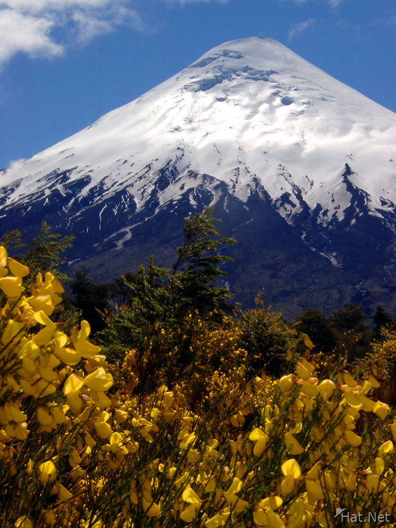 osorno and yellow