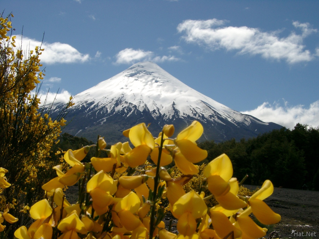 volcano osorno and yellow flowers