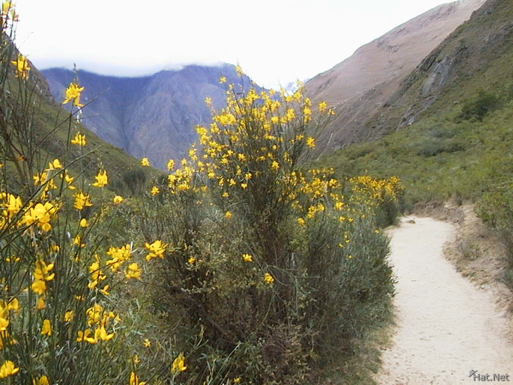flowers around inca trail